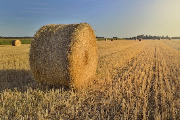 Scenic rural landscape with a haybale in a field at sunset Premium Photo