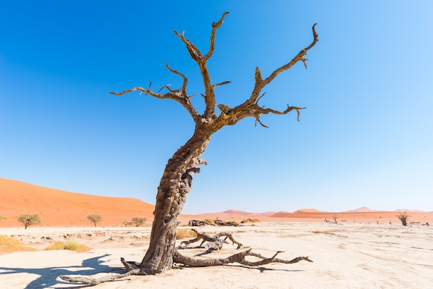 The scenic sossusvlei and deadvlei, clay and salt pan with braided acacia trees surrounded by majestic sand dunes. Premium Photo