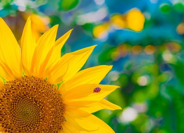 Живописные обои с крупным планом подсолнечника на зеленом фоне с цветами. закрыть подсолнечника, селективный фокус на размытый фон Бесплатные Фотографии