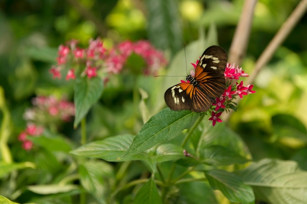美しい蝶、緑の自然の背景に昆虫、schmetterlinghausで撮影、 Premium写真
