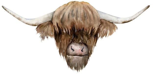 スコットランドのハイランド牛の頭。手描きの水彩イラスト。 Premium写真