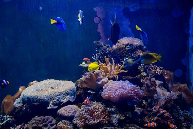 Sea anemone with clown fish Premium Photo