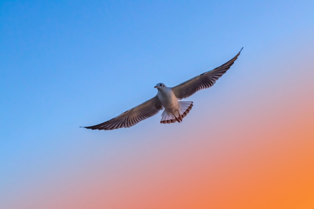 Sea Birds Flying Freedom In The Sky Photo Premium Download