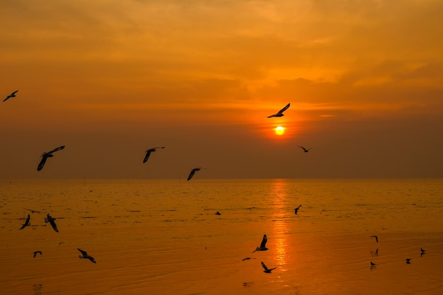Sea gull fly over the sunset travel in thailand Premium Photo