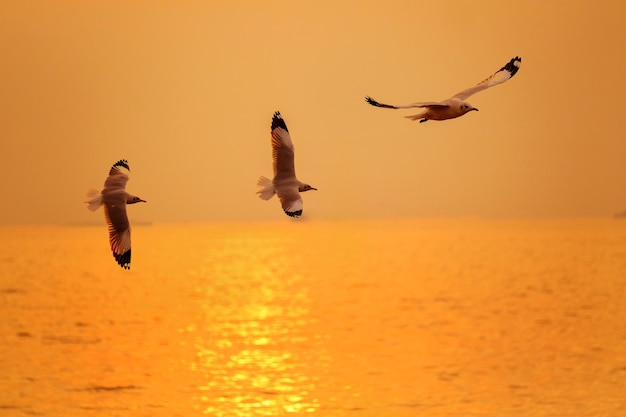 Sea gull fly over the sunset Premium Photo