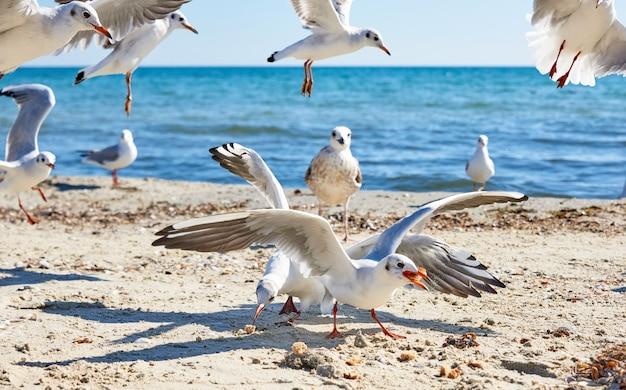 Sea gulls on the beach in a summer sunny day, ukraine village lazurnoe Premium Photo