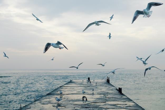 桟橋の上を飛んでいるカモメ Premium写真