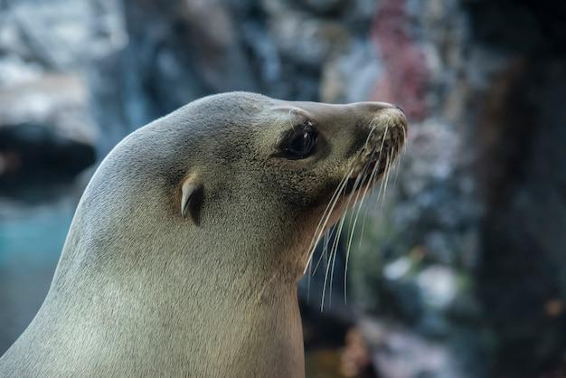 Sea lion posing. Premium Photo
