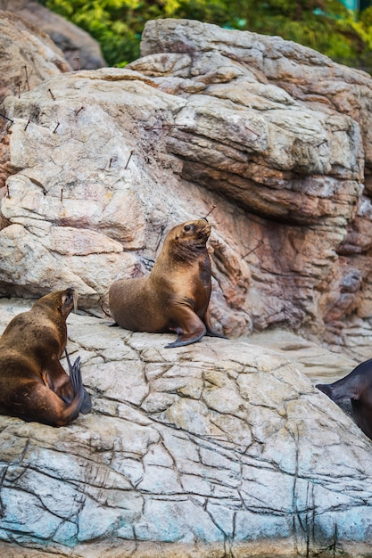 Sea lions Free Photo