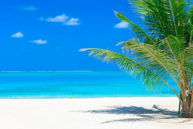 Sea in maldives Premium Photo
