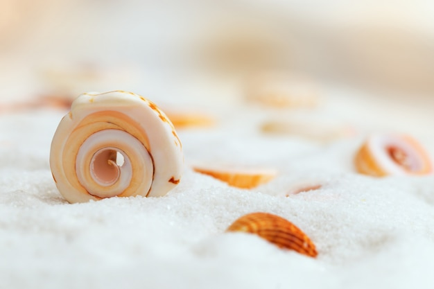 Sea shell on the fine white sand with a blurry background Premium Photo
