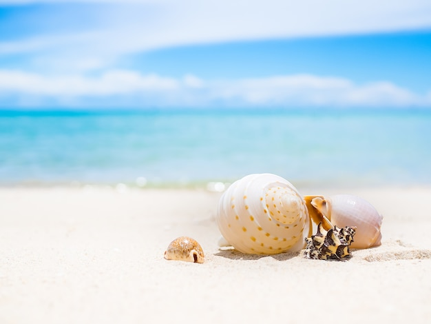 Sea shell on sand beach with blur image of blue sea and blue sky. ocean pattaya thailand. for travel summer holidays. Premium Photo
