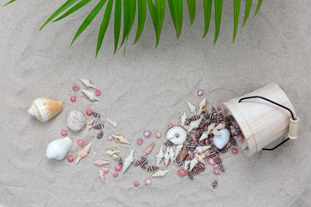 Sea shell with plam leave on the beach. Free Photo