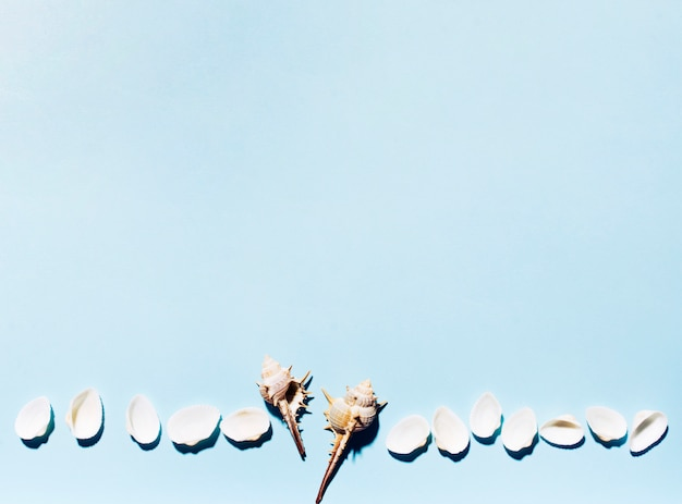 Sea shells in row on colorful background Free Photo