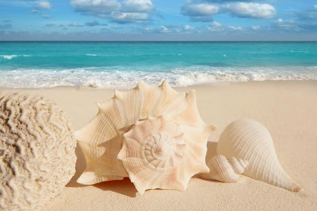 Sea shells starfish tropical sand turquoise caribbean Premium Photo