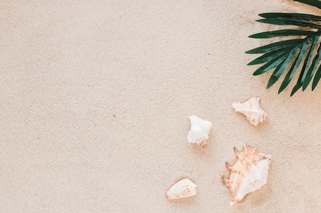 Sea shells with green leaf on sand Free Photo