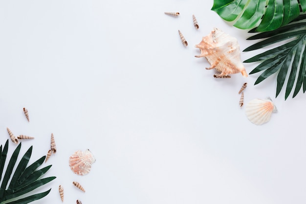 Sea shells with green leaves on table Free Photo