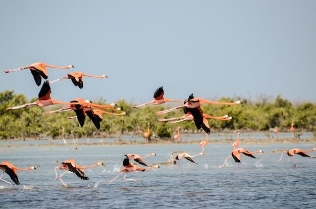 Море с летающими над ним чайками с зеленью на стене Бесплатные Фотографии