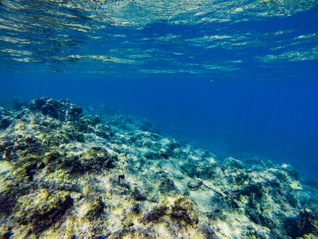 Seabed with coral reefs and algae under blue-green water Premium Photo