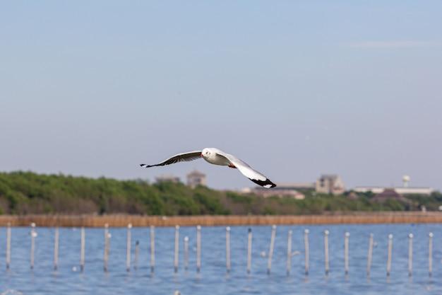 갈매기는 호수 위로 날고있다 프리미엄 사진