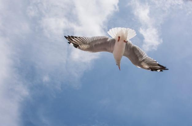 Seagull and blue sky Premium Photo