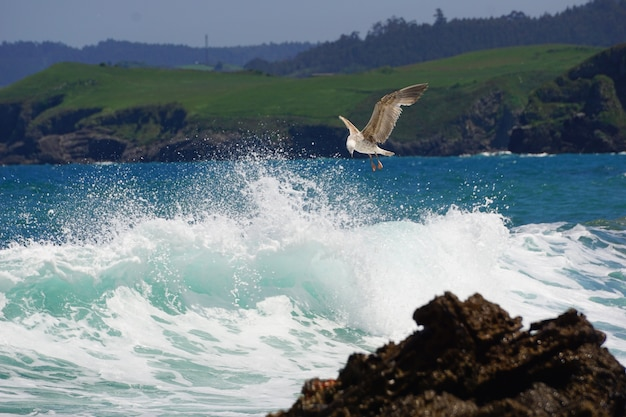 A seagull fishing on the shore Free Photo