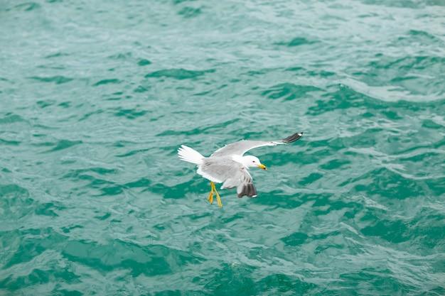 青い海を飛ぶカモメ。 Premium写真