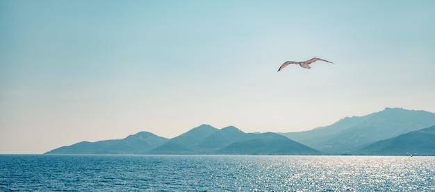 Seagull flying over sea Premium Photo