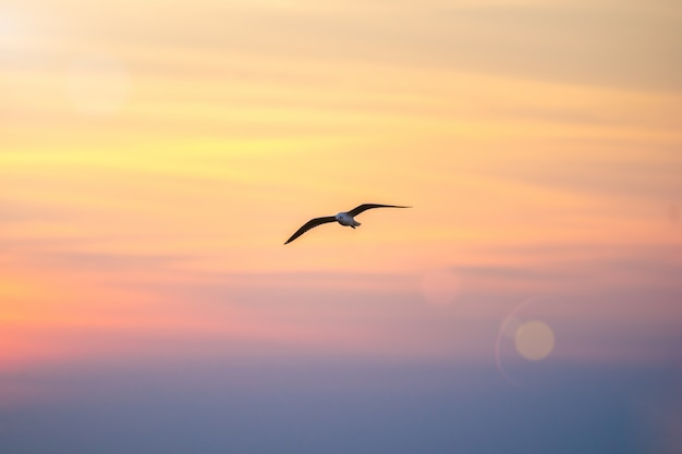 Seagull flying in the sky. Premium Photo