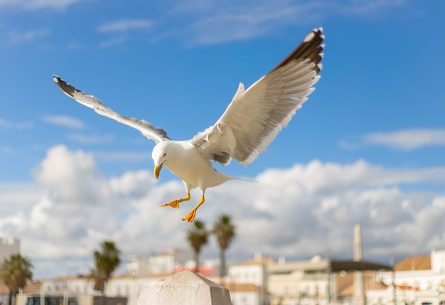 Seagull flying with blurred houses Premium Photo