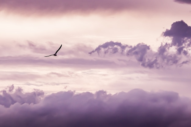 Seagull flying with clouds background Free Photo