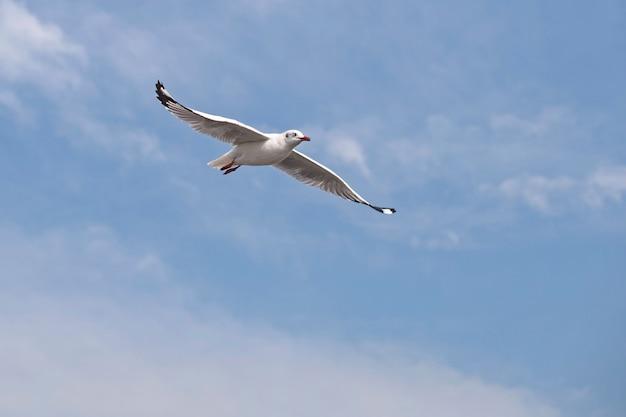 Seagull flying Premium Photo