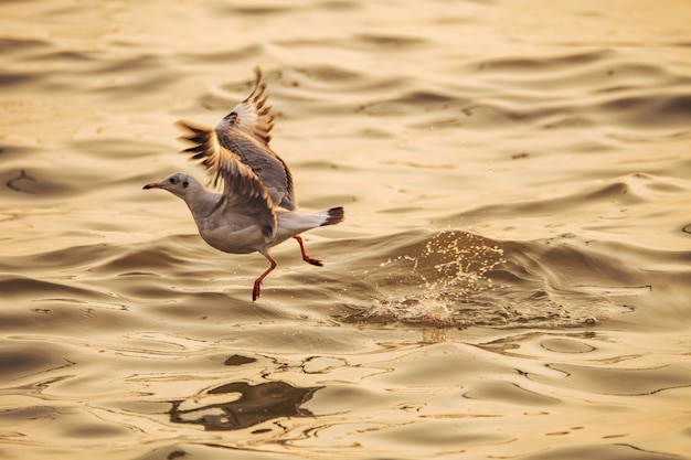 A seagull is taking off from the water Premium Photo