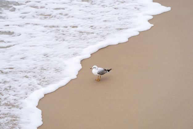 砂浜のカモメが波を見る Premium写真