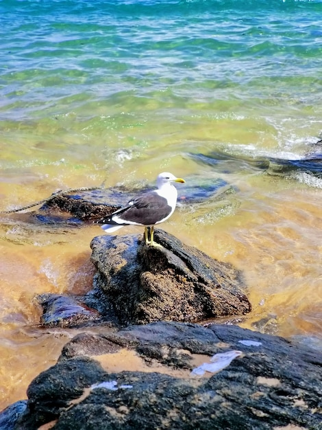 Seagull on the rocks of the beach Premium Photo