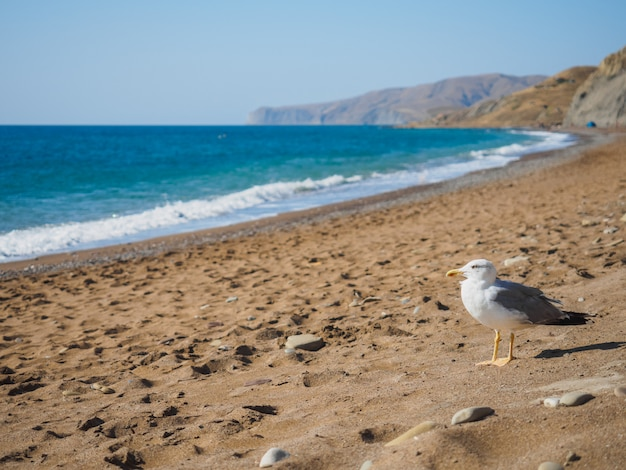 Seagull on the sea shore laspi on the black sea Premium Photo