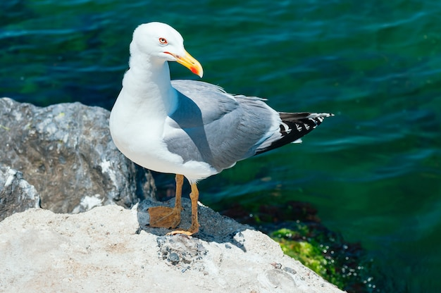 Seagull sitting on the rock Premium Photo