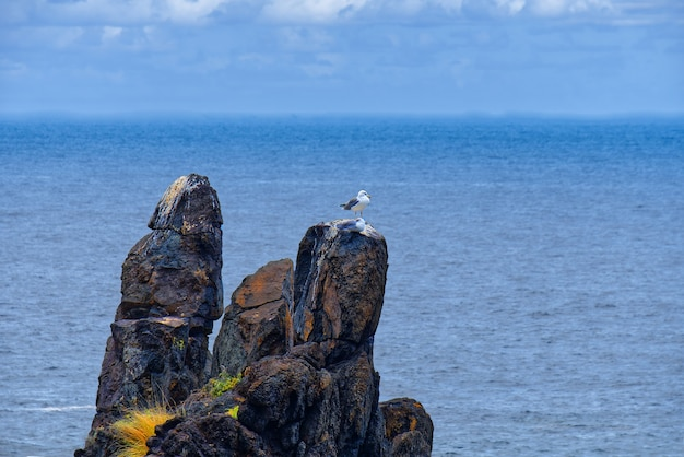 ぼやけた海と岩の上に立っているカモメ 無料写真