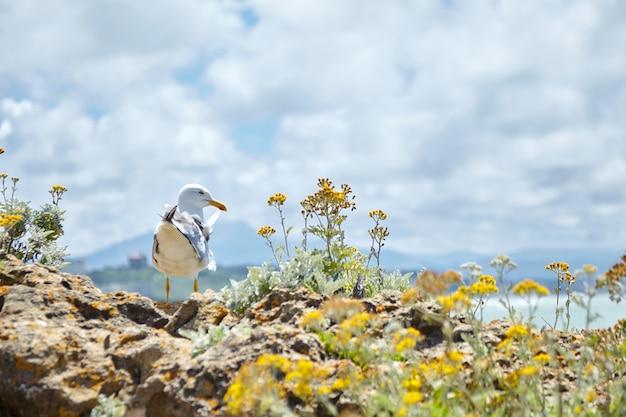 黄色い花の間の石の上に立っているカモメ Premium写真