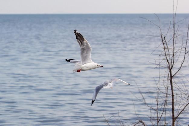 갈매기가 호수 위로 날고있다 프리미엄 사진
