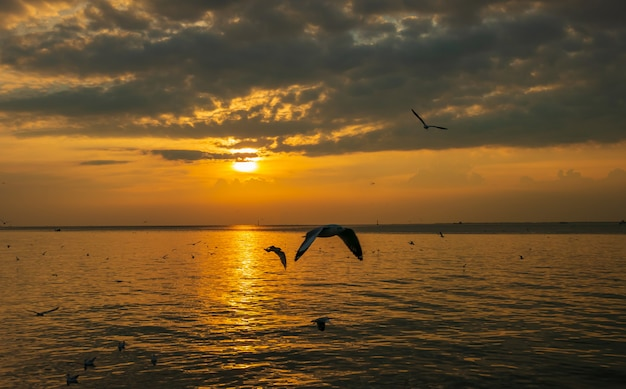 Seagulls at bangpoo in the evening Premium Photo