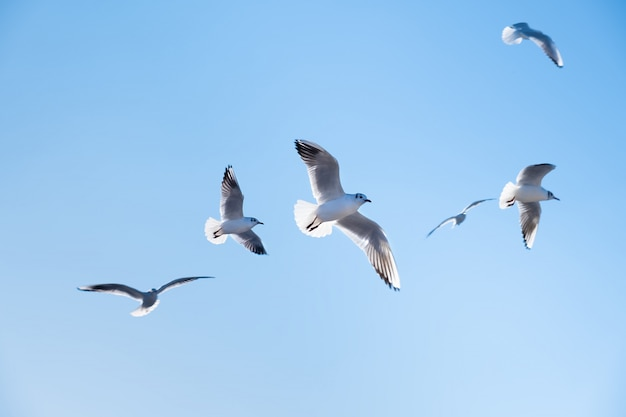 Seagulls birds fly in the blue sky Free Photo