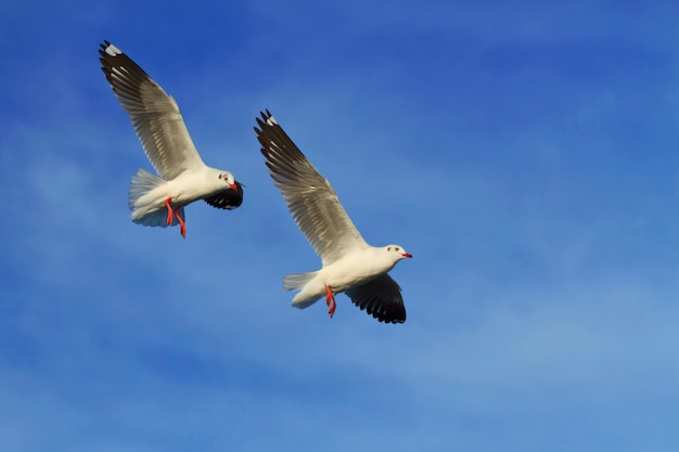 Seagulls flying in blue sky background Premium Photo