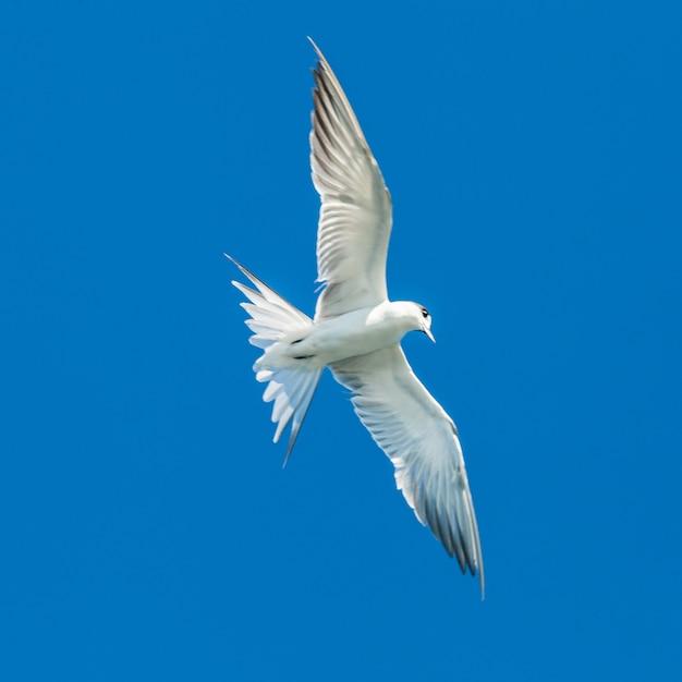 Seagulls flying on blue sky Premium Photo