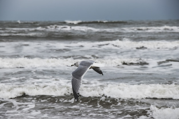 Seagulls flying by the ocean Premium Photo