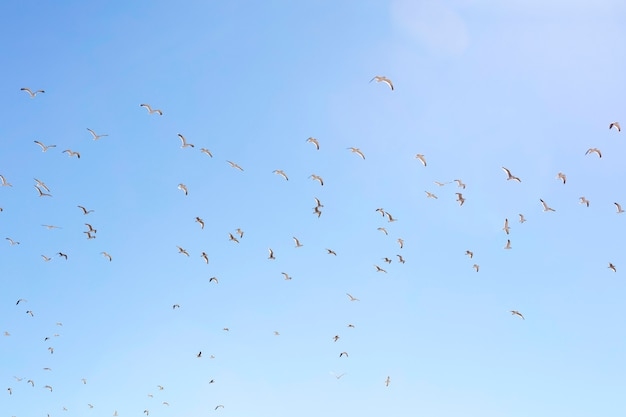 Seagulls flying in a clear sky Premium Photo