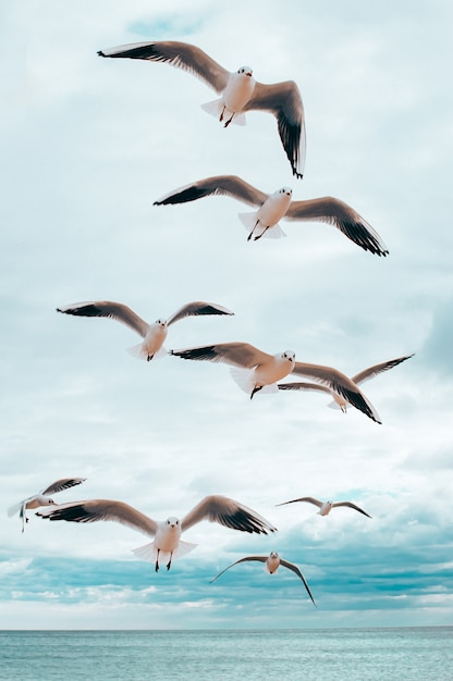 Seagulls flying above the sea Premium Photo