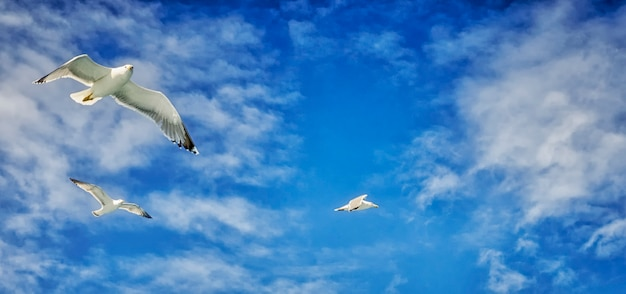 Seagulls following the ferry Premium Photo
