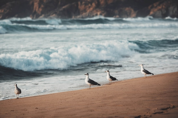 Seagulls on the shore of a beach Premium Photo