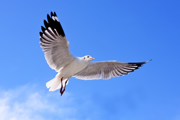 Seagulls Premium Photo